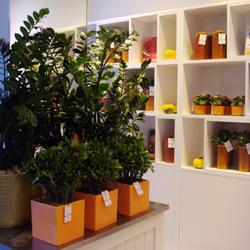 John Lewis Flowers Jane packer uk home page john lewis flowers oxford street 2 sisterspd